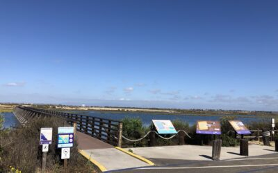 Exploring California's Marine Protected Areas: Bolsa Chica Wetlands