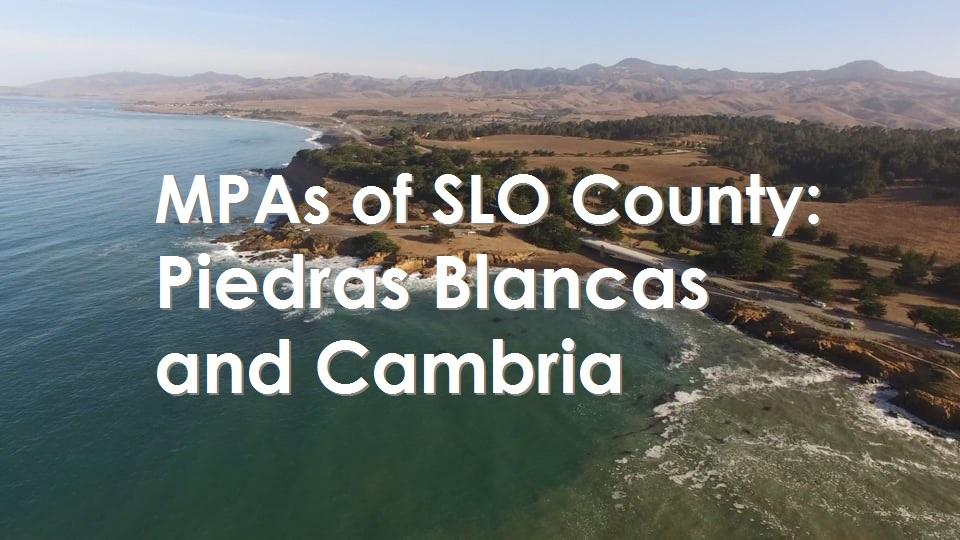 San Luis Obispo: Piedras Blancas and Cambria