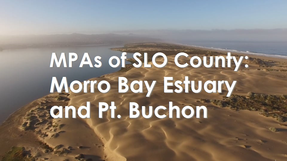 San Luis Obispo: Morro Bay Estuary and Pt. Buchon