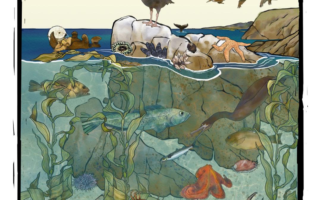 Discover Marine Protected Areas – California Coastal Explorer Guide