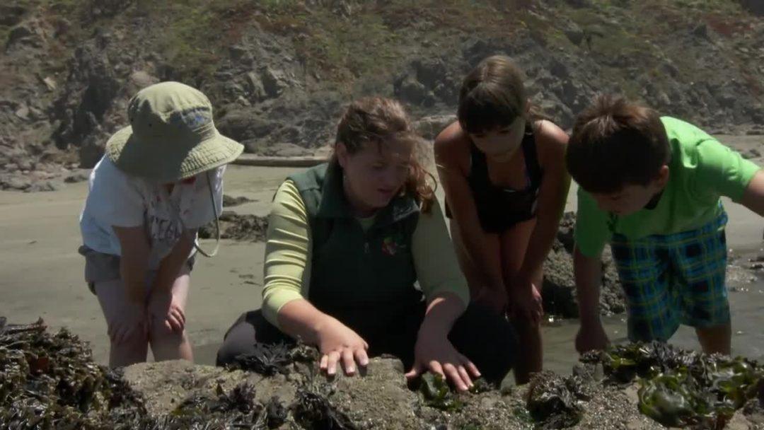 Sonoma: Exploring the Tidepools of the Sonoma Coast
