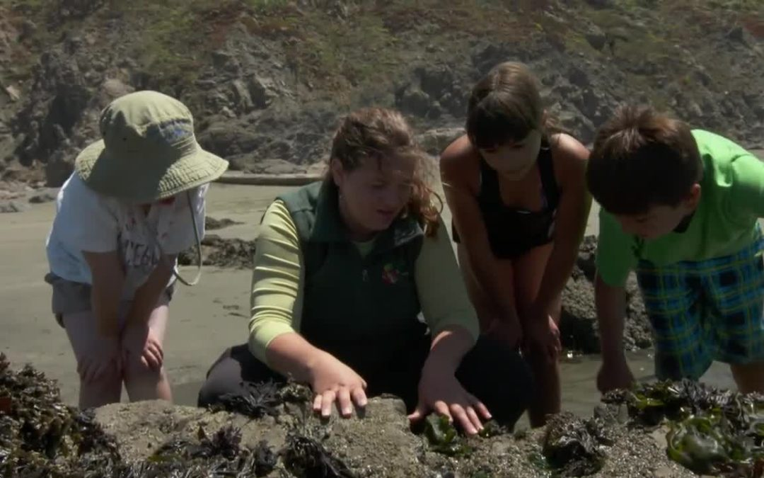 Sonoma: Exploring the Tidepools of the Sonoma Coast