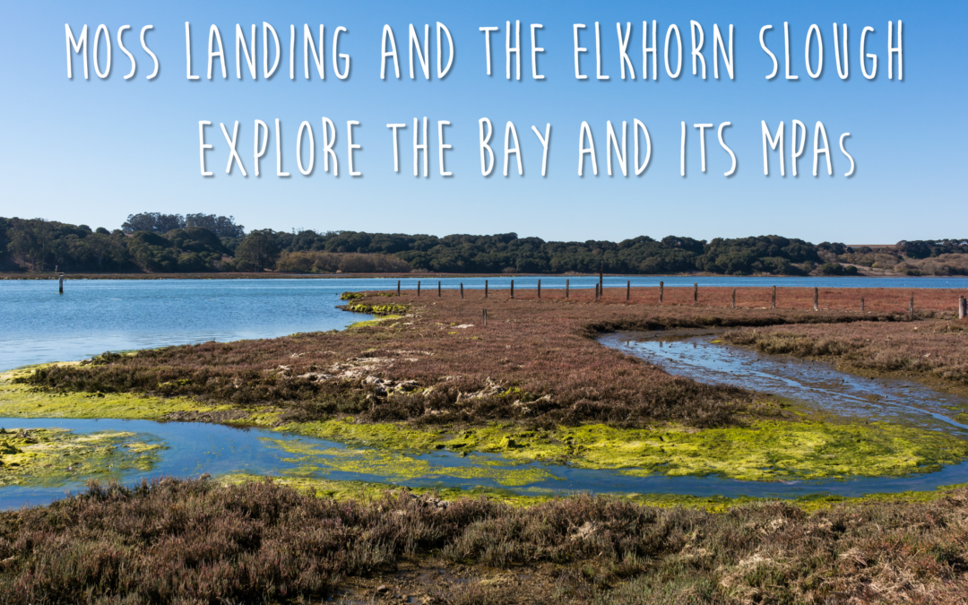 Moss Landing and Elkhorn Slough MPA Guidebook
