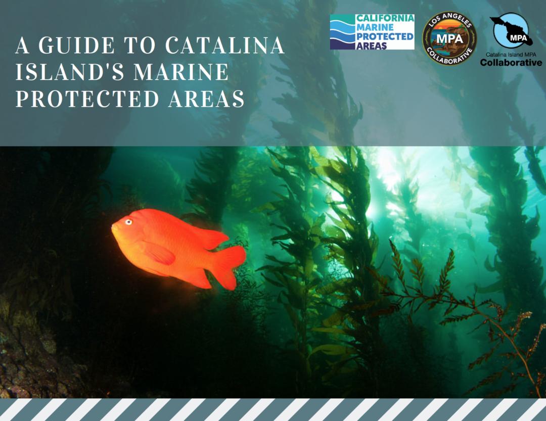 LA & Catalina Island Collaborative Speakers Training Presentation