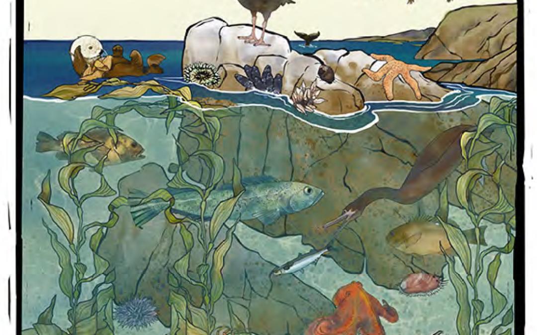 ¡A descubrir áreas marinas protegidas!, guía del explorador costero de California