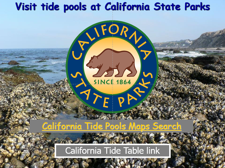 Let's Discover Tidepools PowerPoint