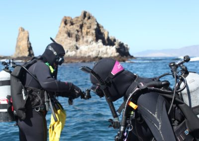CDFW divers surveying warty sea cucumber population in the Channel Islands