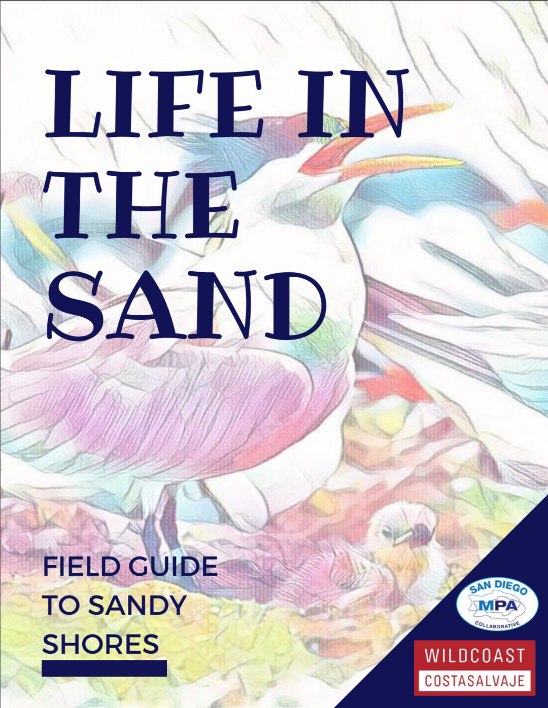 Life in the Sand: Field Guide to Sandy Shores