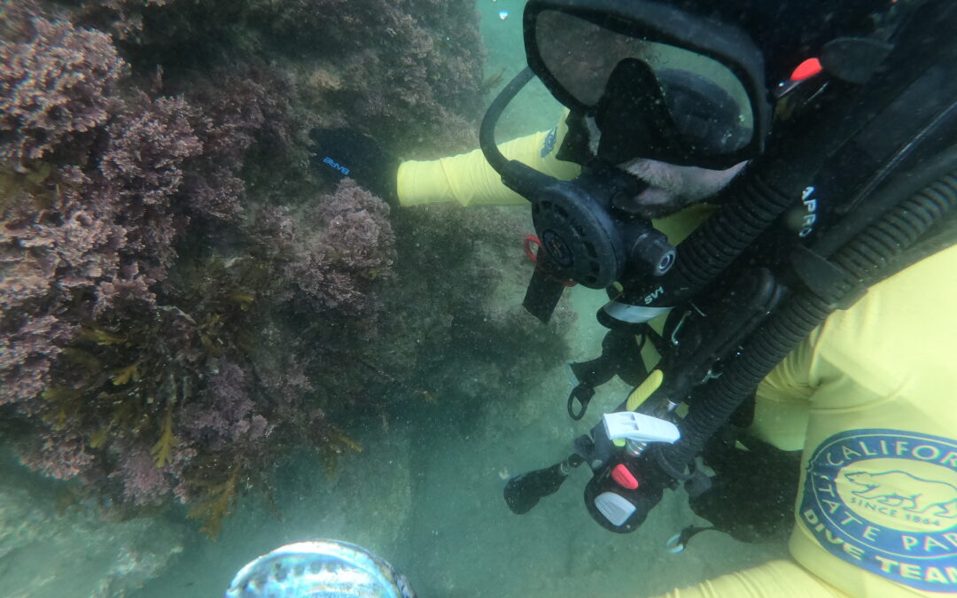 Diving in Crystal Cove State Marine Conservation Area