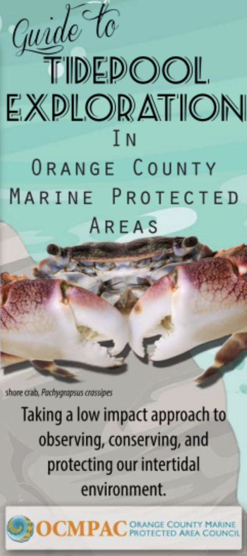 Guide to Tidepool Exploration in Orange County MPAs Brochure
