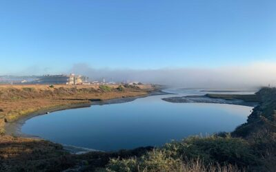 San Diego Coastal Marshes May Become Important Tools to Battle Climate Change