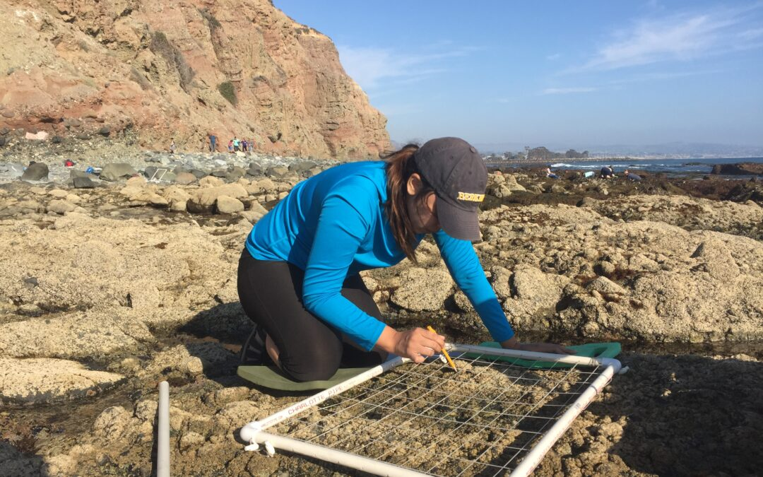 MPA update: Observing the space between land and sea