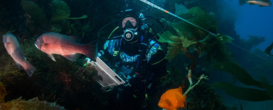 MPA update: Monitoring California's iconic kelp forests