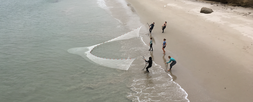 MPA update: Sandy beaches and surf zones offer clues to ocean health