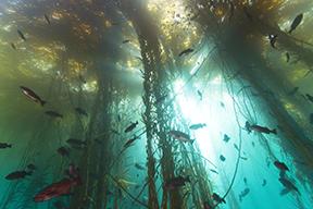 Exploring California's Marine Protected Areas: Big Creek State MarineReserve