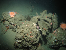 Exploring California's Marine Protected Areas: Soquel Canyon State Marine ConservationArea