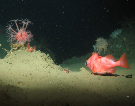 Exploring California's Marine Protected Areas: Submarine Canyon Habitats