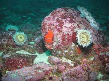Exploring California's Marine Protected Areas: Point Arena State Marine Reserve and Point Arena State Marine ConservationArea