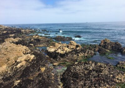 Exploring California's Marine Protected Areas: Pacific Grove Marine Gardens State Marine Conservation Area