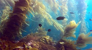 Exploring California's Marine Protected Areas: Anacapa Island State MarineReserve