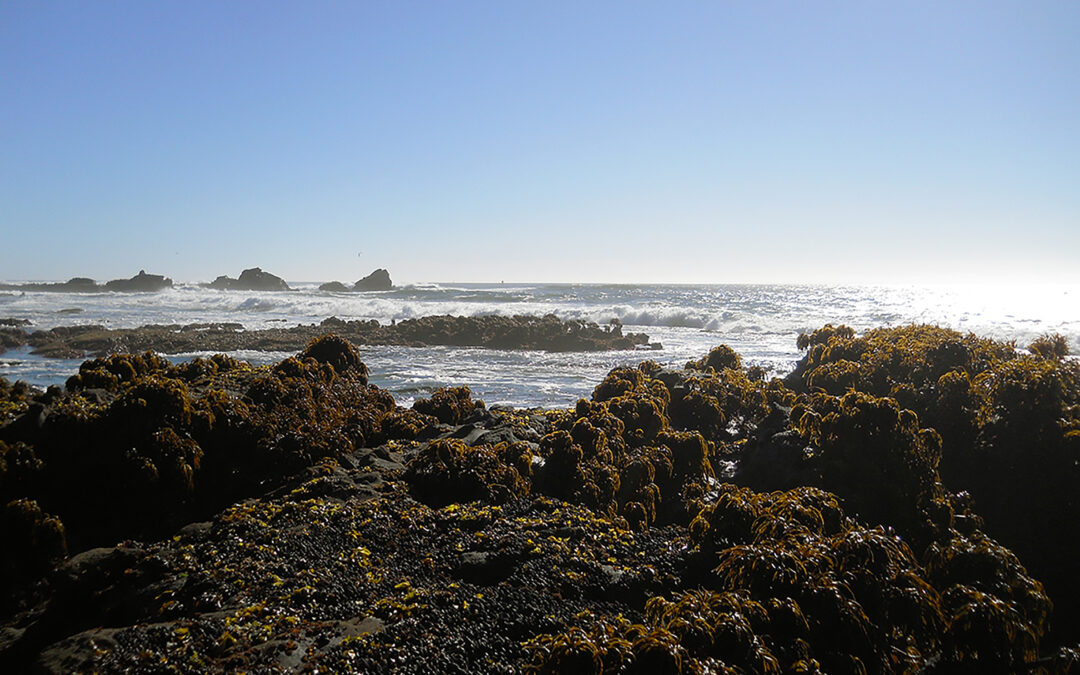 Exploring California's Marine Protected Areas: Pillar Point State Marine Conservation Area