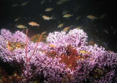 Exploring California's Marine Protected Areas: Farnsworth Onshore State Marine Conservation Area and Farnsworth Offshore State Marine Conservation Area