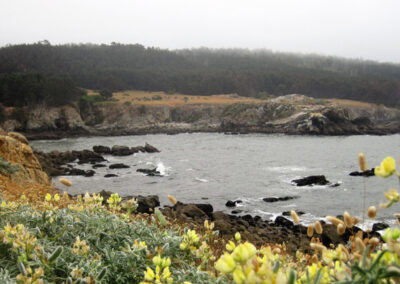 Exploring California's Marine Protected Areas: Gerstle Cove State MarineReserve