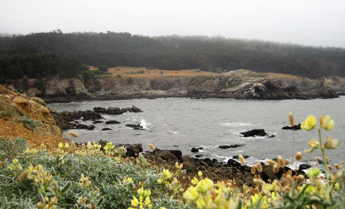 Exploring California's Marine Protected Areas: Gerstle Cove State Marine Reserve