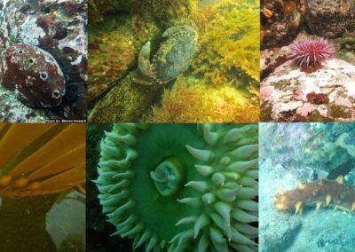 Exploring California's Marine Protected Areas: Van Damme State Marine ConservationArea