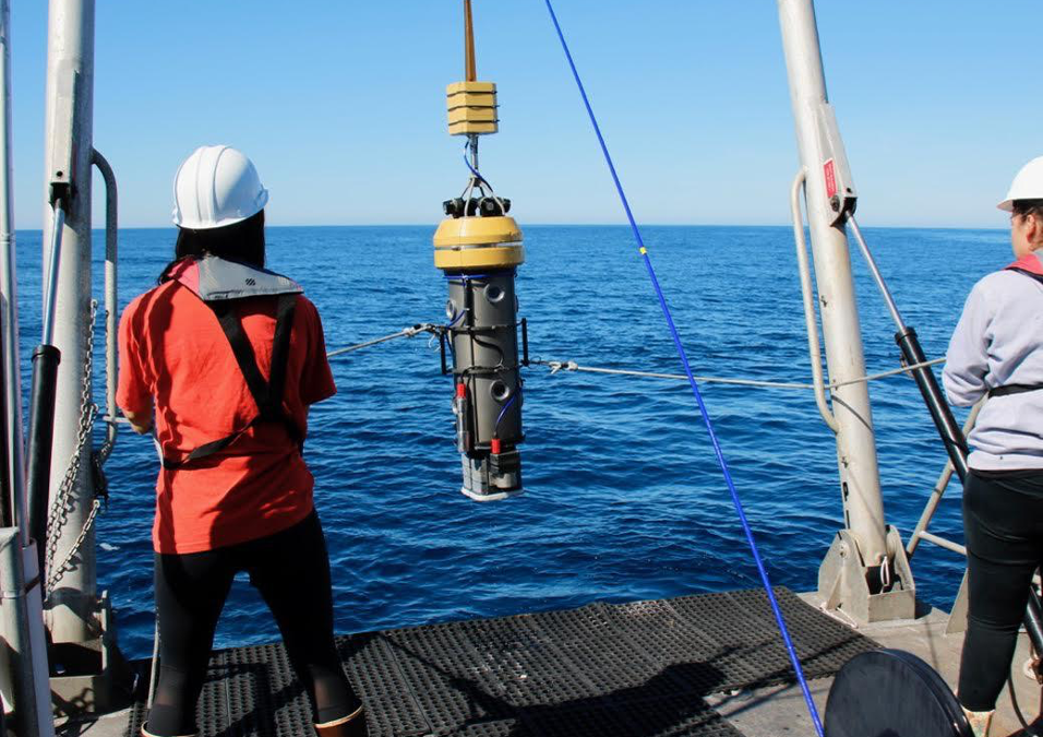 MPA update: A deep dive into the mid-depth rocky reef