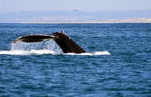 Exploring California's Marine Protected Areas: Portuguese Ledge State Marine ConservationArea