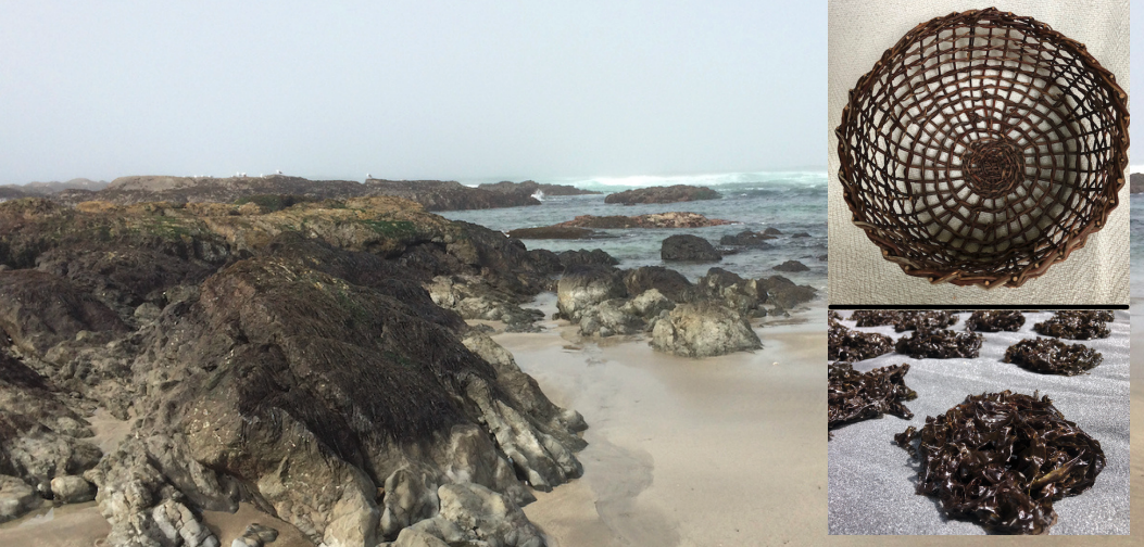 California Tribes and Seaweed